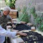Antalya'da 87 yıl sonra kahve üretimi denenecek