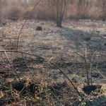 Adil Öksüz'ün çanta gömdüğü iddia edilen arazideki yangın! Soruşturma başlatıldı