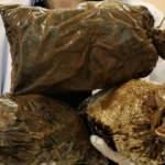 Düzce'de üretilen bu mantarın kilosu 3 bin TL!