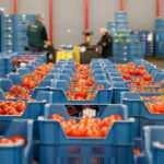 Yaş sebze-meyve ihracatında tüm zamanların rekoru kırıldı