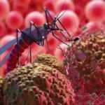 Japon bilim insanlarından kanserde çığır açacak sivrisinek buluşu