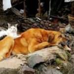 Kedi ile köpeğin iç ısıtan dostluğu