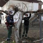 Tarihi asma ağacı özenle korunuyor