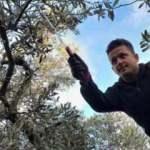 Aktarlarda cep yakıyor, Bursa'da bedava dağıtılıyor