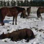 Arnavutköy'de sahipsiz atlar yürekleri burktu