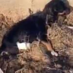 Caniler! Yavru köpeğin bacaklarını kesmişler
