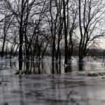 Edirne'de Tunca Nehri kenarındaki tarlalar soğuk nedeniyle buz tuttu