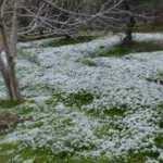 Kuşadası'na 6 yıl sonra kar yağdı!