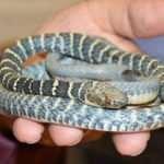 Türkiye'de yeni bir yılan türü keşfedildi