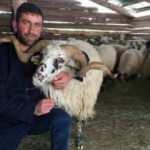 Çobanı evlilik vaadiyle dolandıran genç kadın tutuklandı