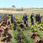 Kadın çiftçiler 11 çeşit ürün yetiştiriyor