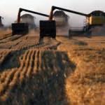 Rusya buğday ihracat vergisini iki katına çıkardı
