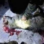 Mahalleye inen kurt çocuğa ve kadına saldırdı