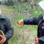 Hatay'da bir çiftçi kadın ektiği biberleri toplarken yılana benzediğini görünce şok oldu!