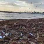 Kadıköy'de utandıran görüntü: Sahil çöple dolu!
