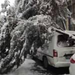 Kara dayanamayan ağaç, aracın üstüne devrildi