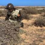 Libya ordusu Sirte-Misrata yolunu mayınlardan temizliyor