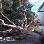 Bodrum'da kuvvetli fırtına ağaçları devirdi