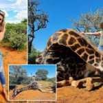 Zürafayı katledip kalbiyle poz verdi! 'Harika kocam' savunması pes dedirtti