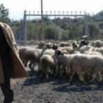 Keçi çobanlığından iş adamlığına!