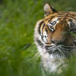 Türkiye'nin en büyük hayvanat bahçelerinden biri! Yeni sezona hazır