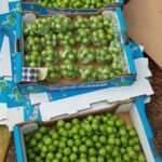 Mersin'de erik hasadı başladı: 8 tanesi 40 TL