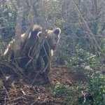 Bursa'da ormanda kapana sıkışan ayıyı jandarma kurtardı!