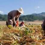 Kadın çiftçiler için yıpranma hakkı talep etti