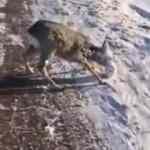 Soğuktan hayvanların yüzü buz tuttu, görenler hayrete düştü!