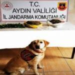 Zeytin ağacının dibine gömülü uyuşturucu narkotik köpeği 'Dilbaz' buldu