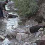 Ayvalık'ta 59 keçi telef oldu