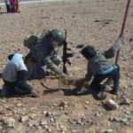 Mehmetçik, Tel Abyad'da anlamlı ağaçlandırma hareketi