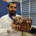 Düzce'de kilosu 1000 lira olan mantarı yetiştirmeyi öğreniyorlar