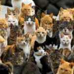 Japonya'daki kedi adası: Aoshima