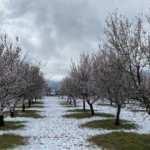 Mersin'de nisan ayında kar sürprizi