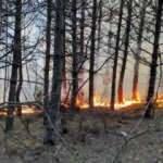 Tekirdağ'da 5 noktada orman yangınıTekirdağ'da 5 noktada orman yangını