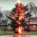 ABD'de okul bahçesine düşen yıldırım ağacı ikiye ayırdı