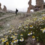 Bahar çiçekleri Kapadokya'yı renklendirdi