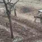 Ceviz ağacının altında otururken üzerine yıldırım düştü