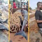 Korkutan görüntü: 60 yunus kıyıya vurdu