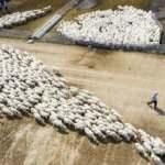 Hayvancılık işletmelerine yeni zorunluluk