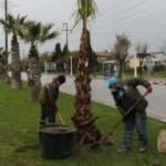 Manisa'da kaybedilen ağaçların yerine yenileri dikiliyor