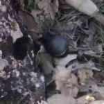 Mardin'de teröristlere ait el bombası ele geçirildi