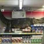 Korkunç anlar kamerada: Dev kertenkele markete girdi!