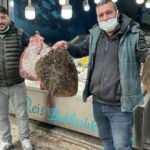Karadeniz'de kalkan balığı bereketi: Kilosu 200 liradan satılıyor