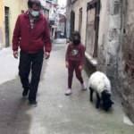 Kuzusu hastalanan vatandaş veteriner bulamayınca hastaneye gitti