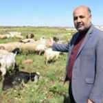 Manidar açıklama: Coine değil koyuna yatırım yapın