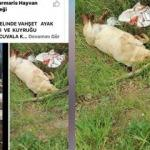 Büyük vicdansızlık! Sokakta bakılan köpek vahşice katledildi