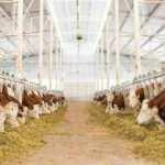 Sütün fiyatı kalitesine göre belirlenecek