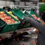80 dönüm alanda elma bahçesi kurdu şimdi dünyaya satıyor